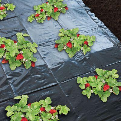Nature Markduk för jordgubbar 1,4x20 m 6030231
