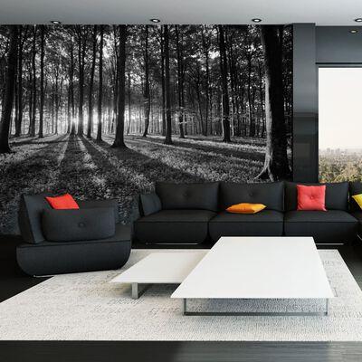 Fototapet - The Light In The Forest - 100x70 Cm