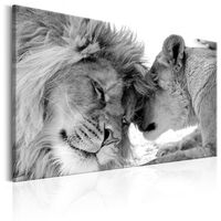 Tavla - Lion's Love - 120x80 Cm