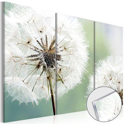 Foto På Akryl - Fluffy Dandelions   - 60x40 Cm,