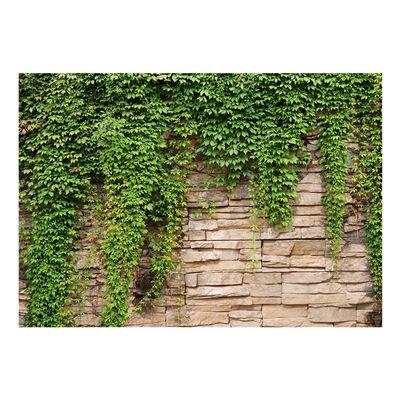 Fototapet - Ivy Wall - 150x105 Cm