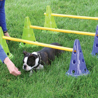 FitPAWS Agilityset för hundar Canine Gym