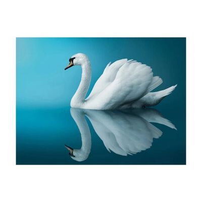Fototapet - Svan - Reflektion - 400x309 Cm