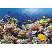 Castorland Pussel 1000 bitars, Coral Reef Fishes