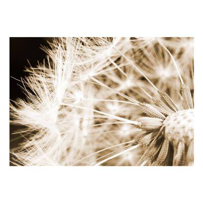 Fototapet - Dandelion - Sepia - 100x70 Cm