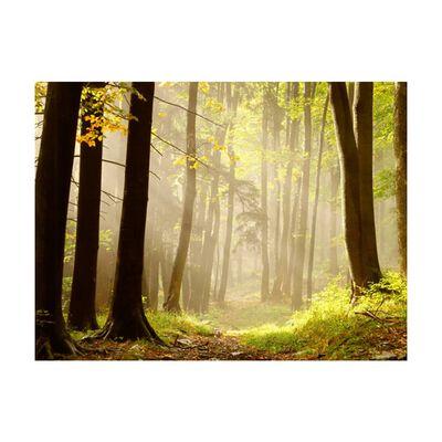 Fototapet - Mysterious Forest Path - 250x193 Cm